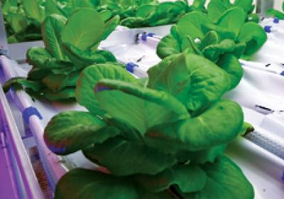 Food production systems like hydroponics help restaurants use more local goods.
