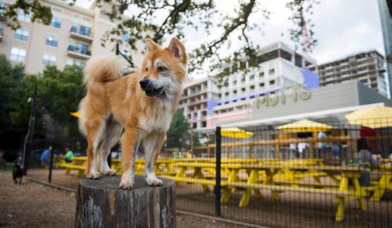 MUTTS Canine Cantina dog.