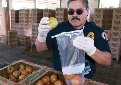 An FDA consumer safety officer works at the border crossing testing food safety.